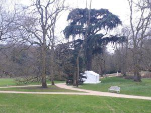 Le cèdre de Chateaubriand